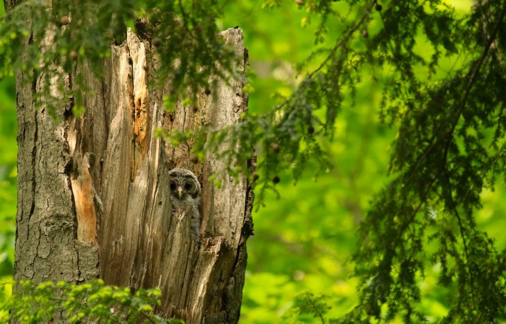 <h5>Look Closely- It&#039;s a Baby Owl!</h5>
