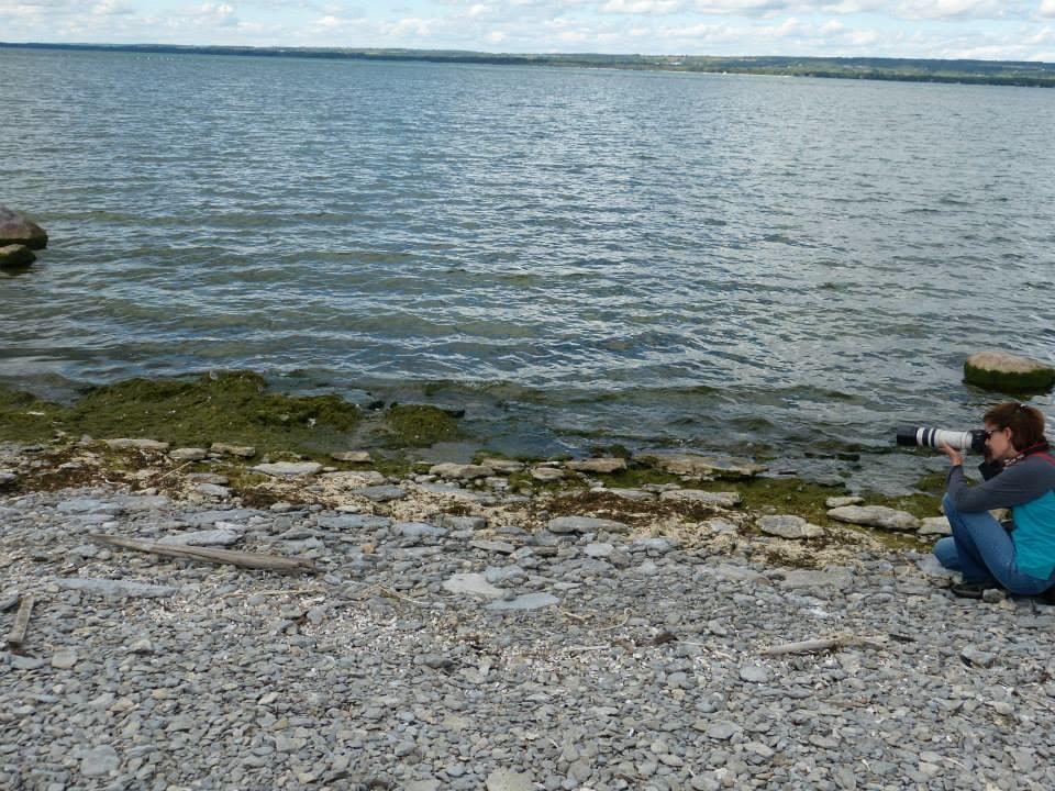 Shorebirds on Gull Island: Photo by Andrea Kingsley