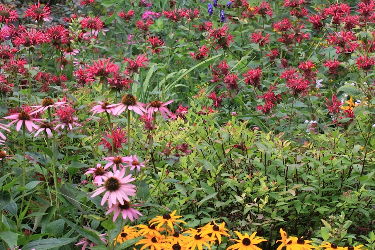 wildlife gardening ontario