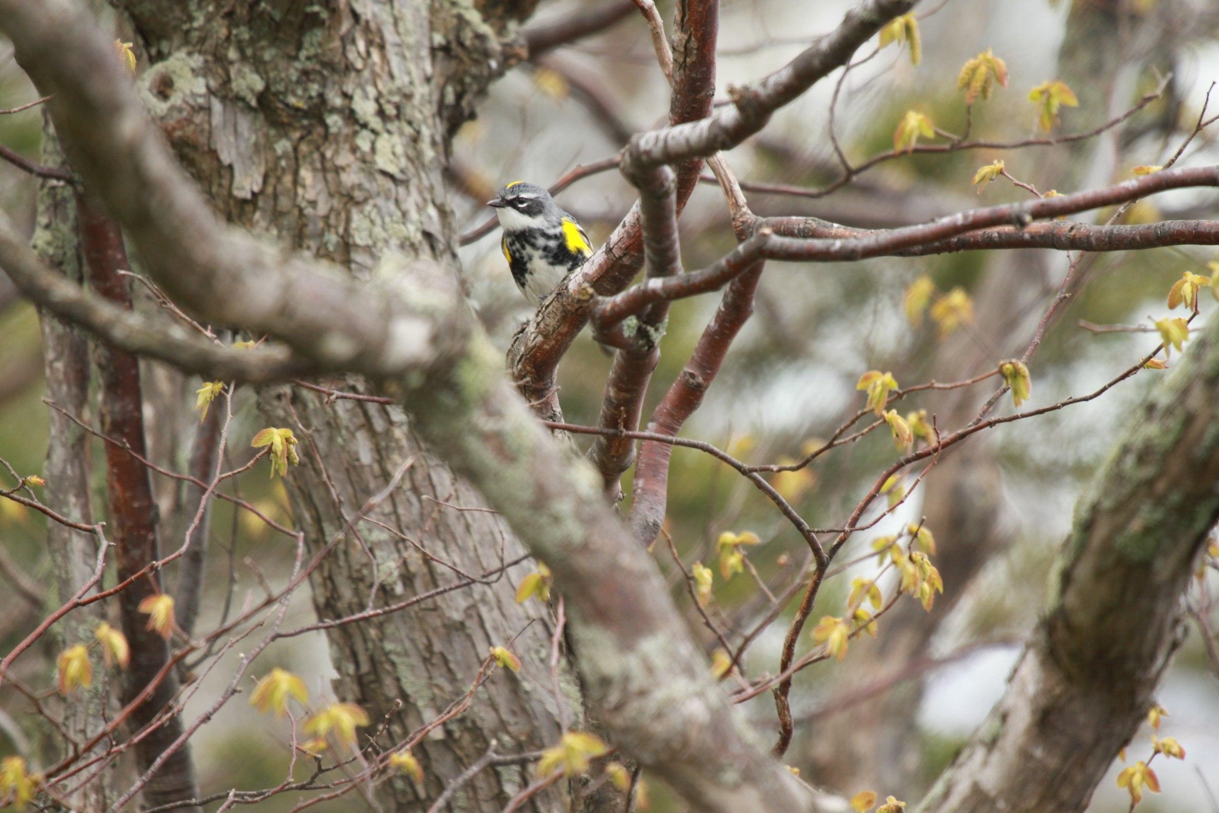 Birding marathon 2017 leslie abram photography img9365 hexwebz Image collections
