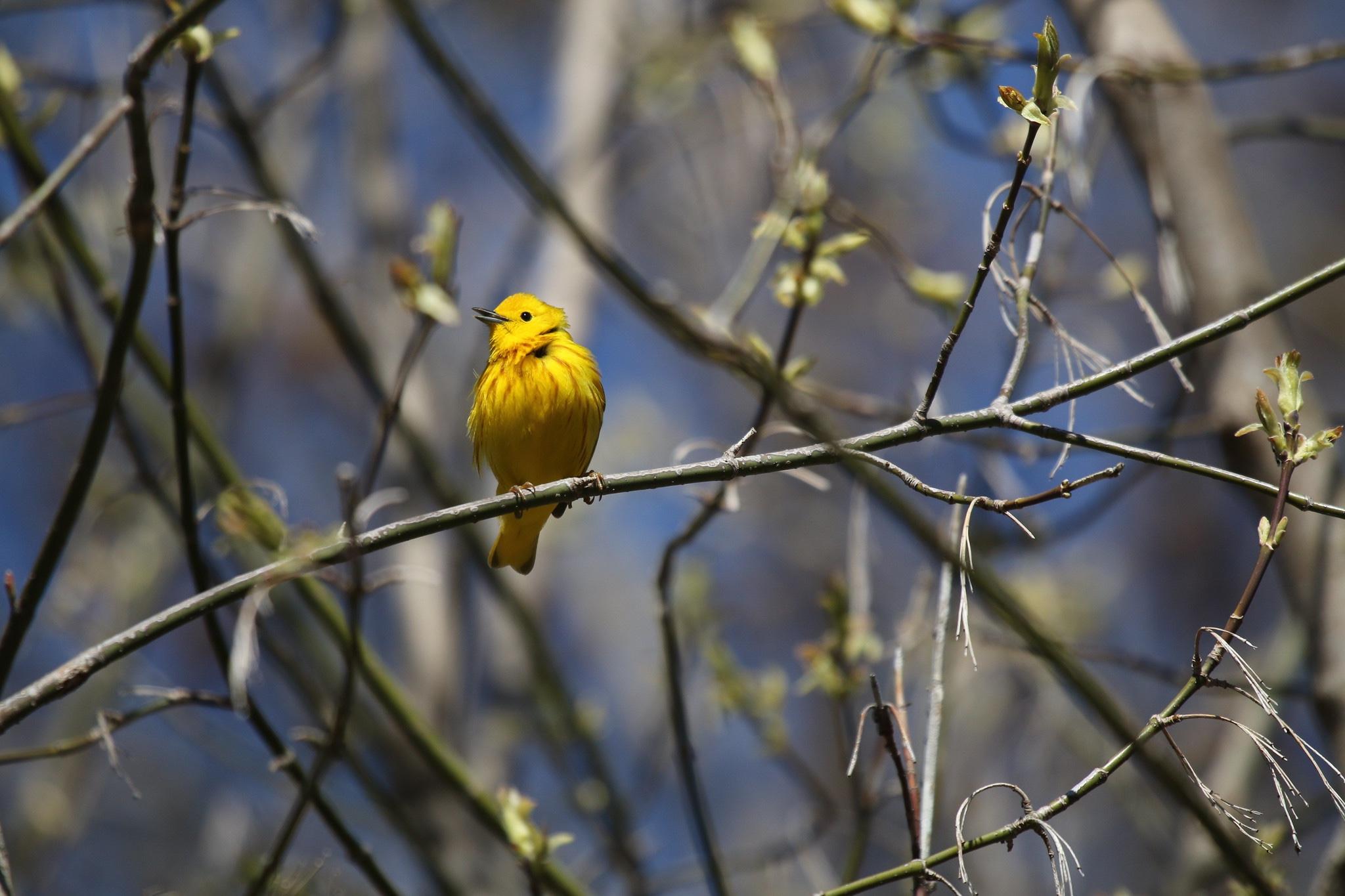 Birding Marathon 2019